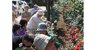 城山学習講座 ~第1回 バラの魅力とその楽しみ方・施肥と病害虫対策