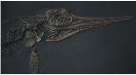 بھارتی ریاست گجرات سے سائنسدانوں کو سولہ کروڑ سال قدیم ڈائنوسار کا ڈھانچہ مل گیا