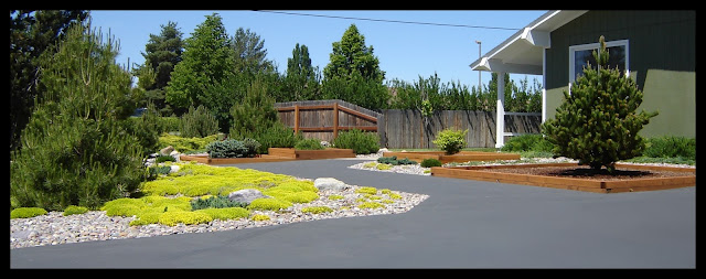 Landscape after Asphalt Removal