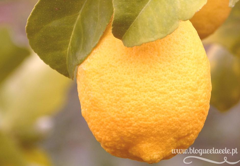 Os benefícios de beber + água com limão + limão + citrico+ citrino + blogue português de casal + pedro e telma + ela e ele + ele e ela + opinião nutricionista