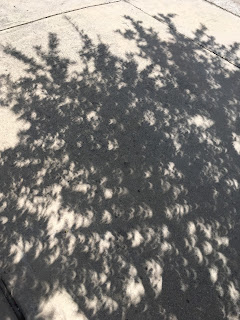 Height of eclipse shadow detail showcasing crescent shapes. Taken in Cedar Park, Texas during total eclipse of the sun.