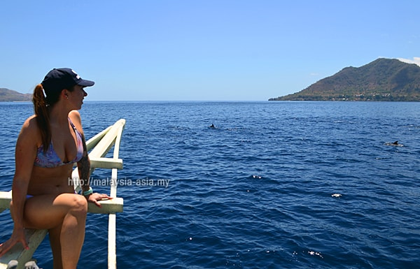 Alor Island Dolphin Watching Tours