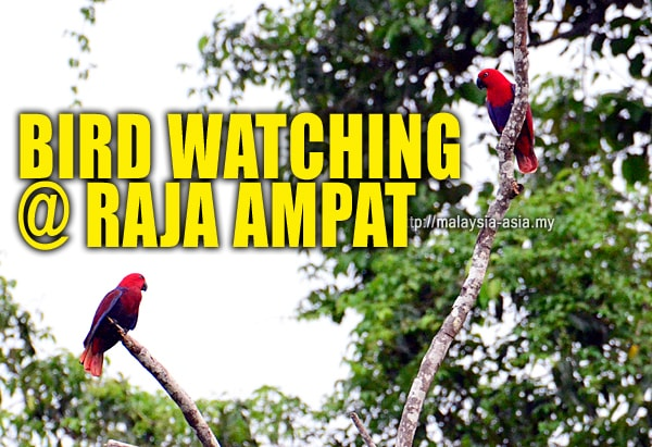 Raja Ampat Bird Watching