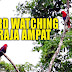 Bird Watching in Raja Ampat