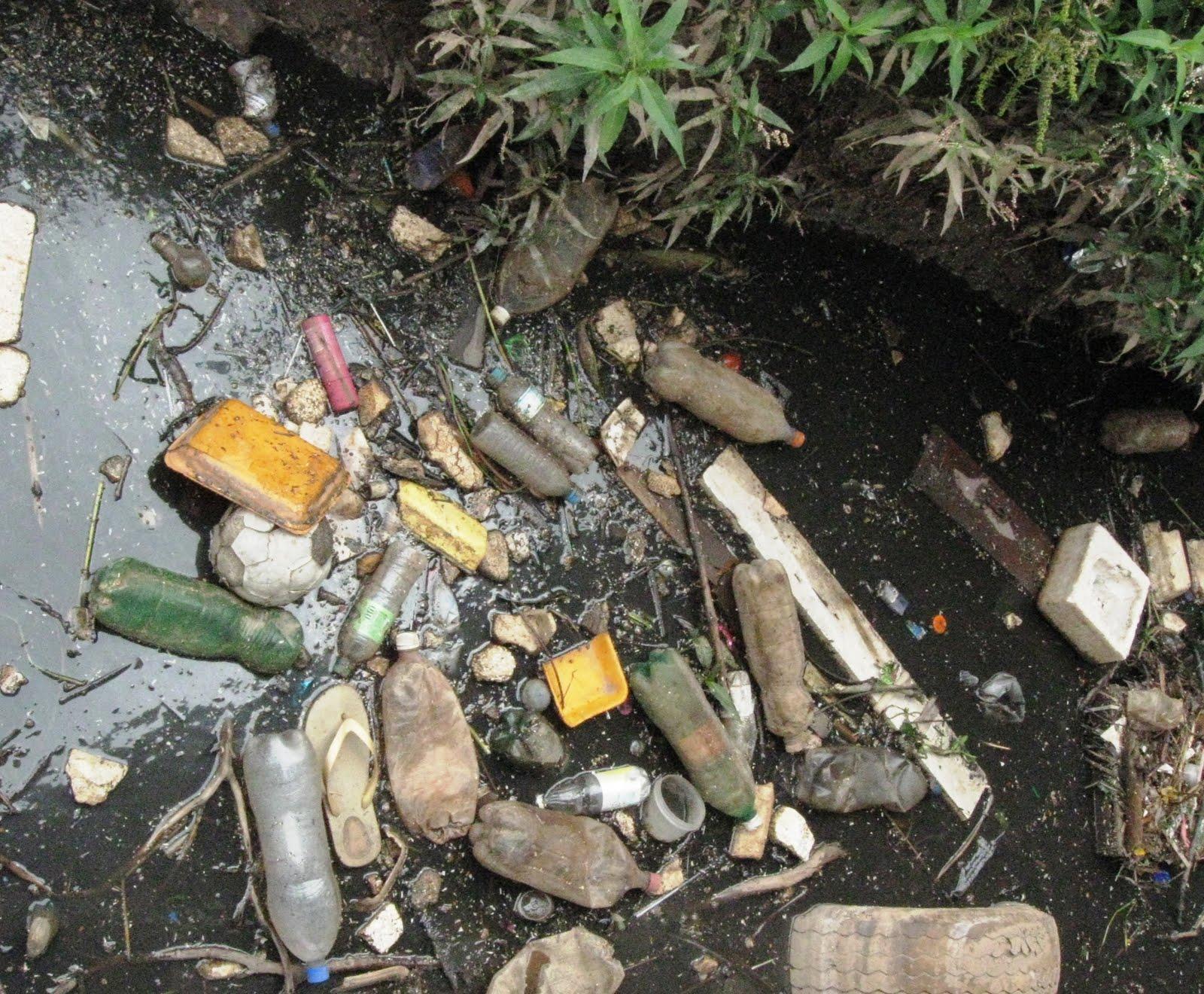 Tabagismo causa enorme dano ao meio ambiente,