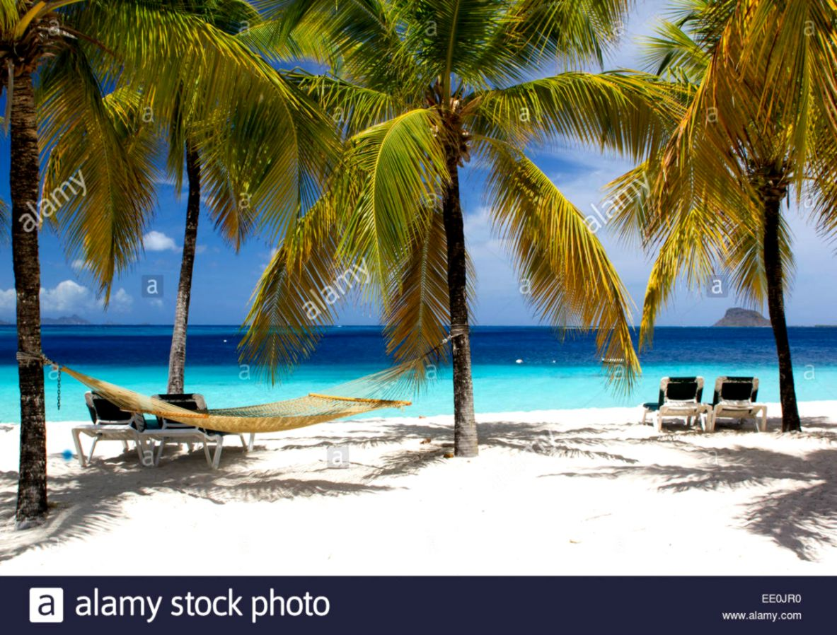 Stunning Tropical Beach Scene with Hammock Sun Loungers Palm
