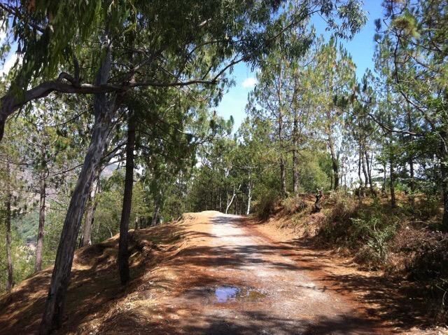 Road near ashram