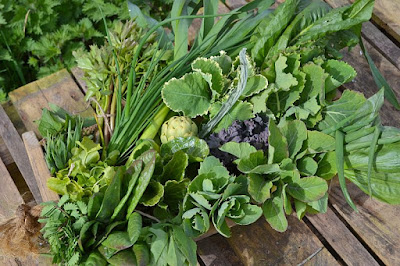Spring harvest of perennial vegetables