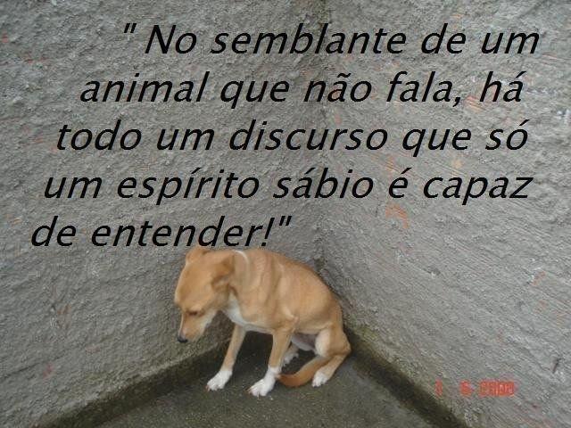 Mensagens Para A Vida!: Dia Nacional Dos Animais 14 De Março
