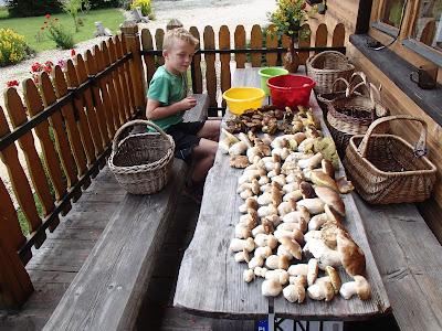 grzyby 2018, grzyby w lipcu, grzyby na Babiej, grzyby na Orawie, borowiki