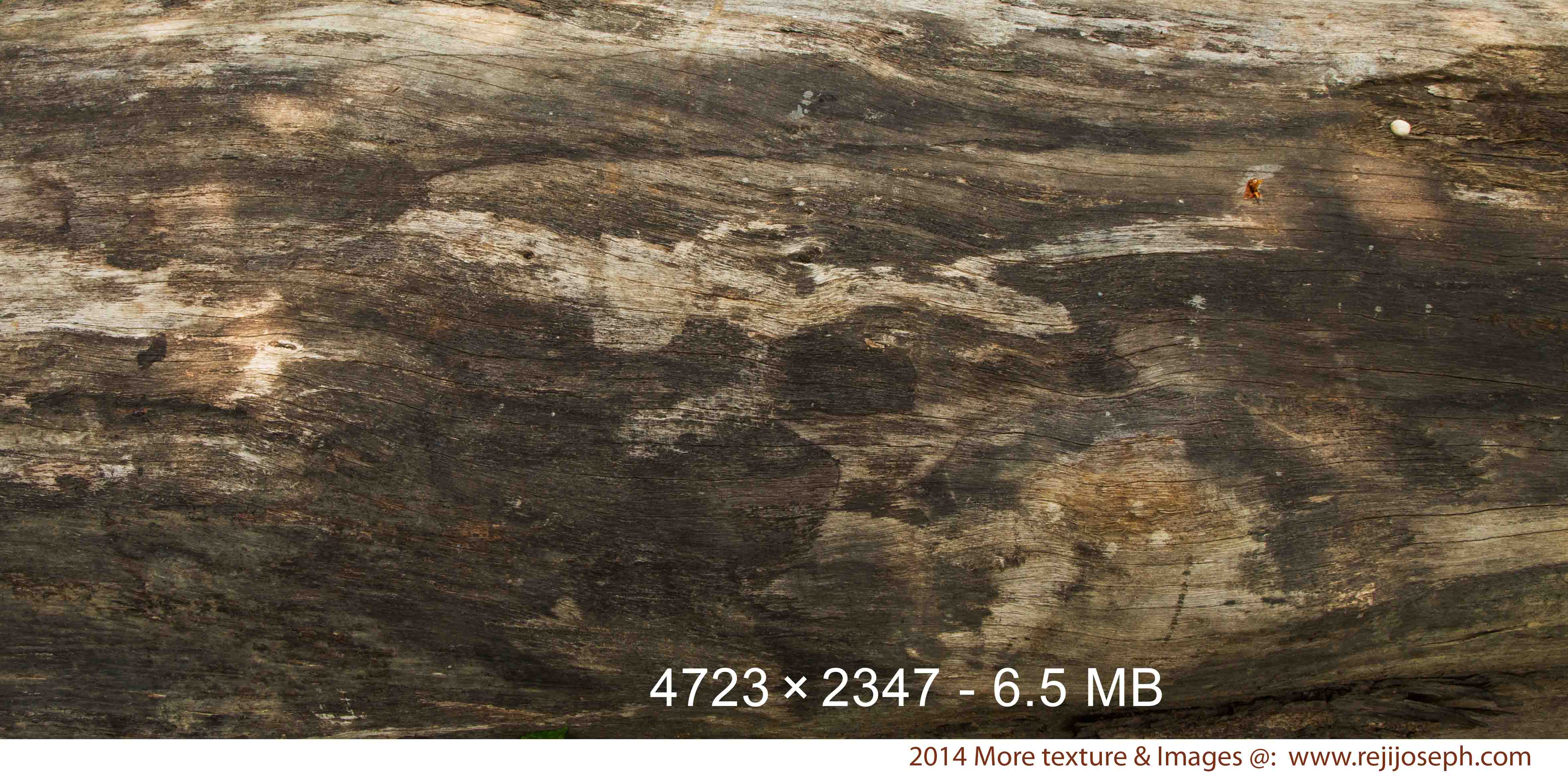 Old Wood texture 00001