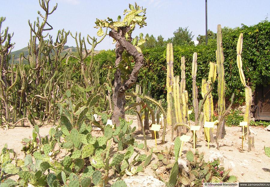 Коллекция кактусовых в Ботаническом саду Балчика (Болгария)