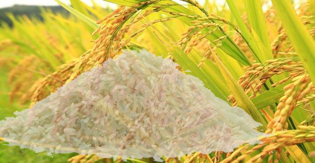 6 Alasan Mengapa Harus Mengkonsumsi Nasi Secara Teratur, 6 Alasan Mengapa Harus Mengkonsumsi Nasi Secara Teratur Manfaat dari makan Nasi Secara teratur Nasi Padang nasi  nasi goreng  nasi lemak  rendang  nasi goreng special  goreng  sambal nasi goreng  indonesian fried rice  menu nasi goreng  recipe nasi goreng  nasi goreng simple  nasi goreng seafood  diet nasi  nasi goreng vegetarian  nasi goreng chinese food  nasi goreng thai  nasi goreng istimewa  menu nasi  nasi sambal goreng  how to make nasi goreng  indonesian rice  fried rice recipe indonesian  goreng nasi  menu nasi goreng spesial  nasi goreng ayam  roti  nasi goren  nasi goreng cina  nasi goreng usa  garnish nasi goreng  nasi goreng daging