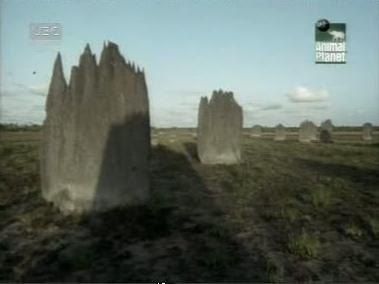10 อันดับสัตว์, ชีวิตสัตว์, สัตว์สถาปนิก, ปลวก (Termites)
