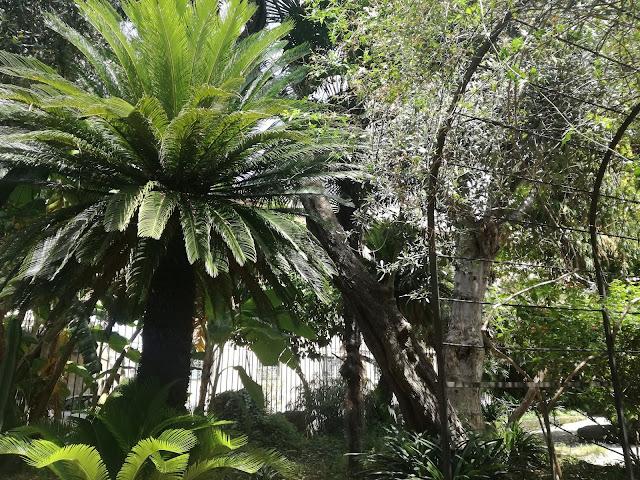 palma w ogrodzie