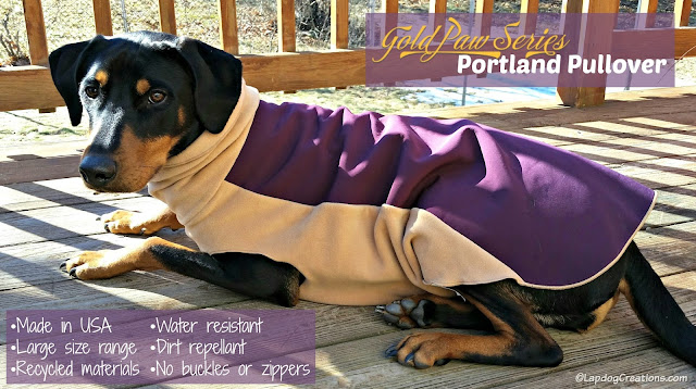 rescued doberman mix dog with jacket