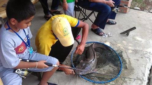 Lele Sangkuriang Umpan Mancing Babon Lele