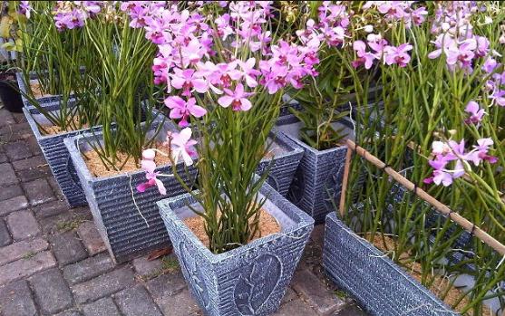 Cara Menanam Bunga Anggrek Yang Benar Dan Praktis Maintanam