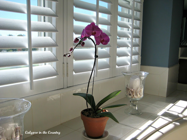 Plantation Shutters in the Bathroom