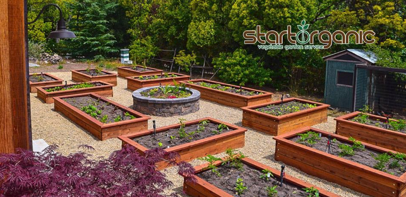 SAN JOSE, CA StartOrganic Vegetable Garden Service Announced Today They Are  Expanding Their Popular Corporate Organic Vegetable Gardening Programs, ...