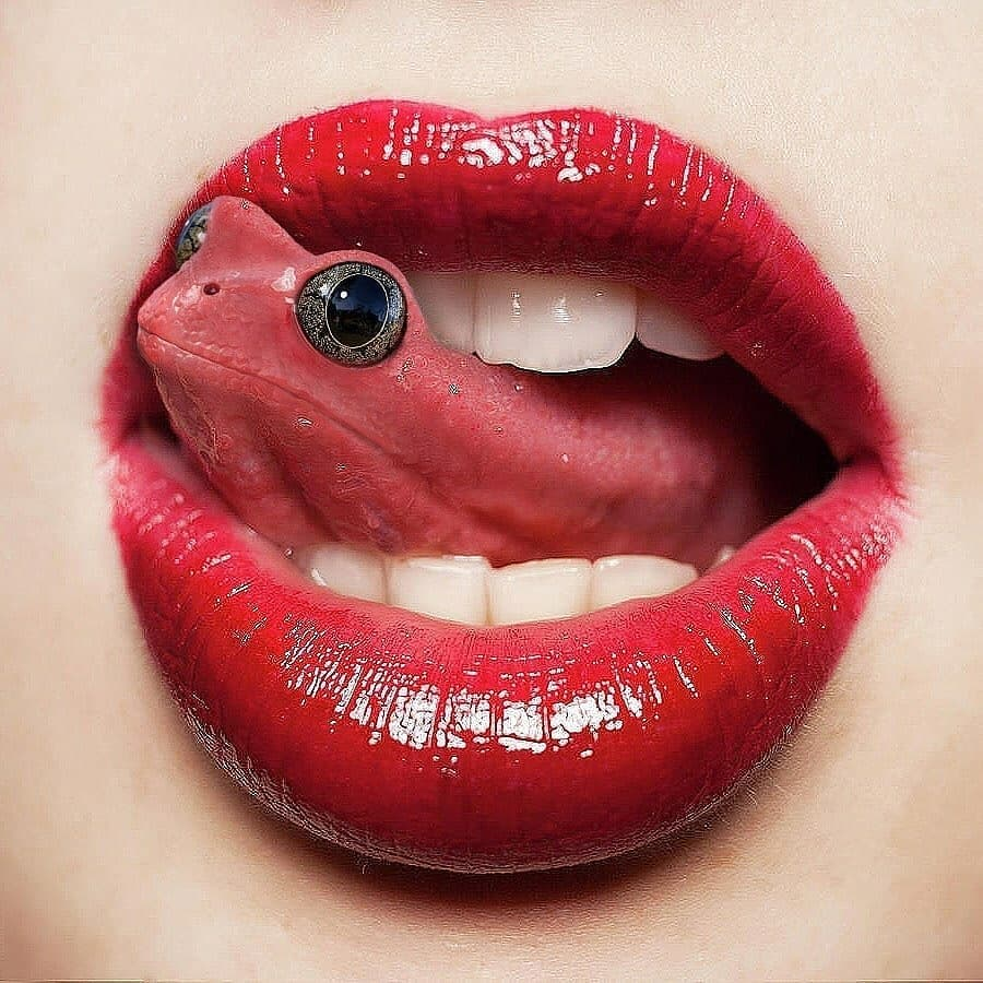 Tongue-frog - photo manipulation