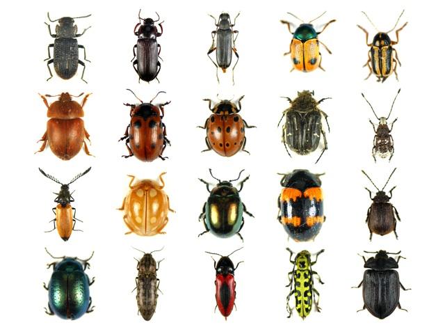 Descrizione insetti - Da dove vengono gli scarafaggi in casa ...
