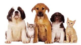 OpenDJ Pets on Kubernetes