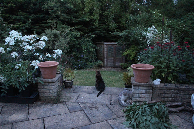 A general view of the garden at 10pm in early July shows how a white rose lights up the gloom