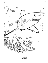 Printable Shark Coloring Pages For Kids Free