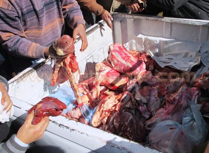 حملات موسعة بمحافظة بورسعيد تكشف عن فساد كميات كبيرة من الدواجن واللحوم بمحلات الجزارة