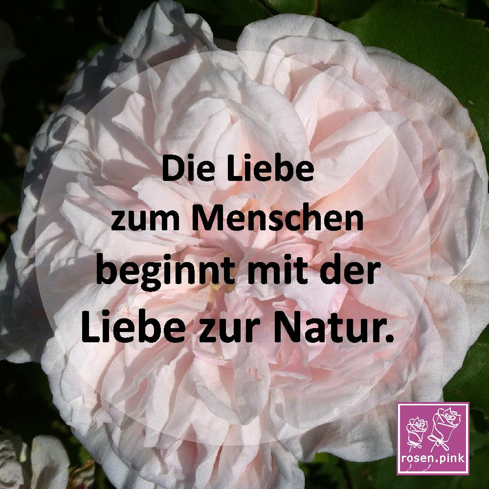 Tolle Gartentipps: Natur Sprüche   weise Zitate über die Natur und
