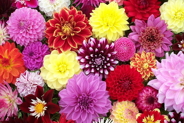 5 Most Creative and Unique Ways To Use Flowers