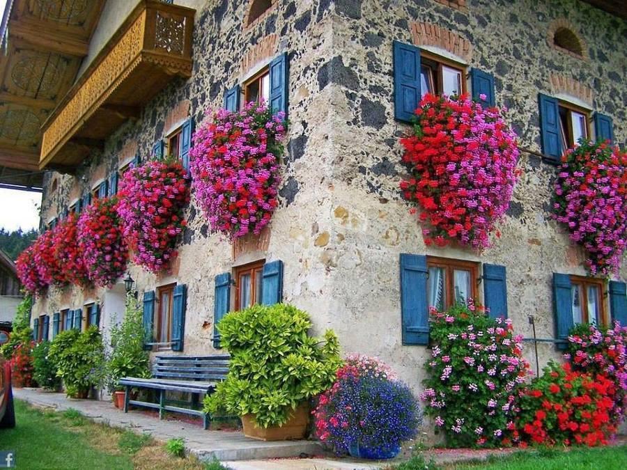 Verde time by stefano tenneroni fiori da balcone pendenti for Fiori gerani