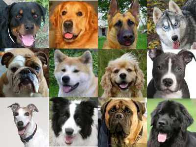 Dogs Breeds and Puppies Reviews: Large Dog Breeds Reviews