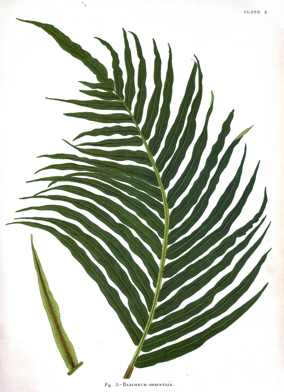Creating My Sanctuary Botanical Prints