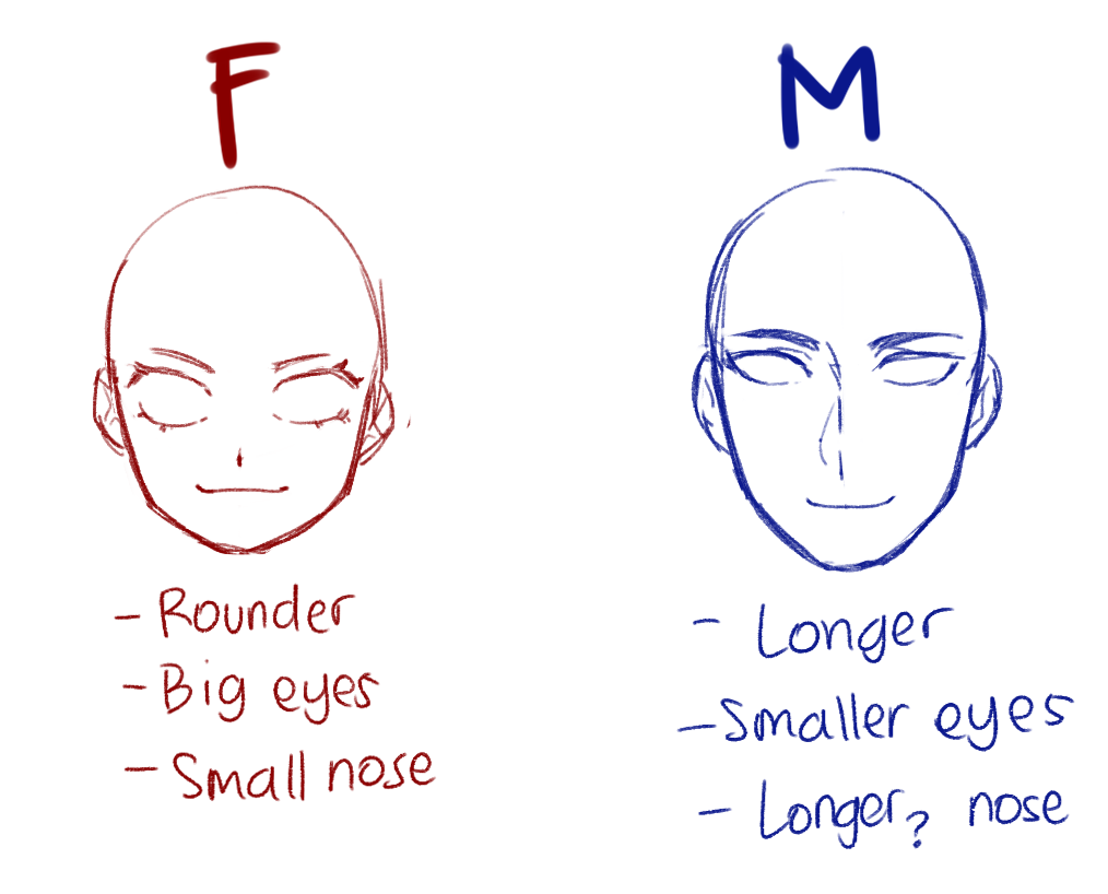 ArtBlog: Simple Anime Anatomy for Female and Male