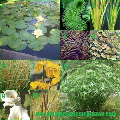 Plantas para un estanque de jardín