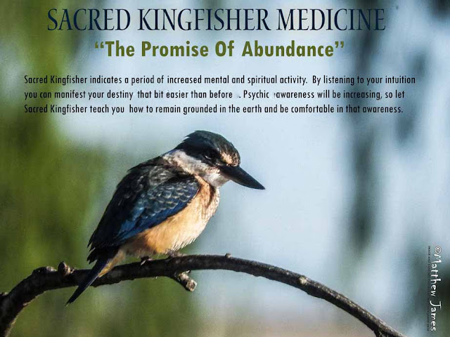 Sacred Kingfisher Totem Meaning