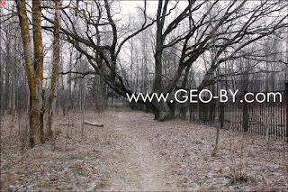 Щемыслица. Дубрава Чапского. Самый старый дуб в городе Минске