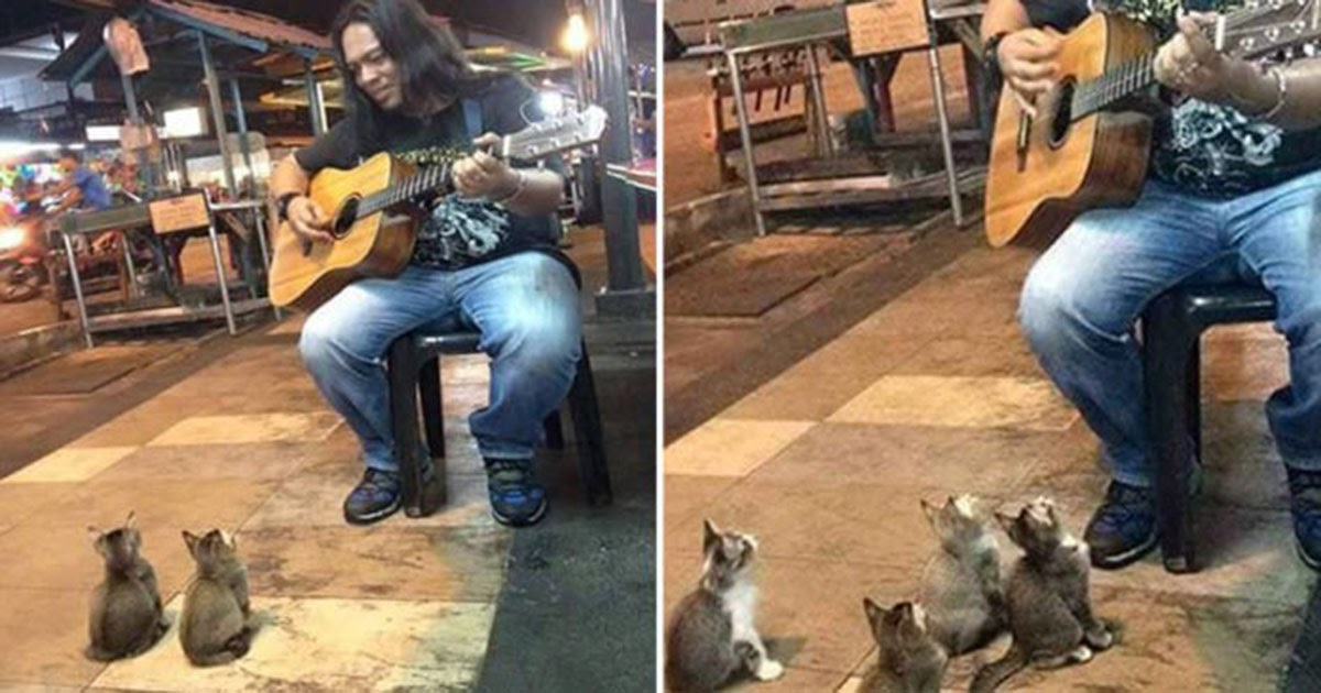 A Street Musician Had Decided To Quit, Until These Little Guys Showed Up