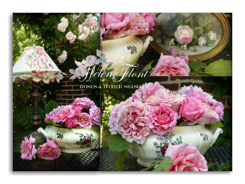Faire Un Rosier Avec Une Rose roses & other seasons : a french cottage journal: un