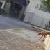 Assista: idoso abusa sexualmente de cadela em praça pública; deputado repudia