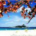 Panorama Cantik Pantai Tanjung Tinggi Belitung