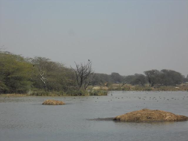 3 days in Delhi: Sultanpur Bird Sanctuary in Gurgaon
