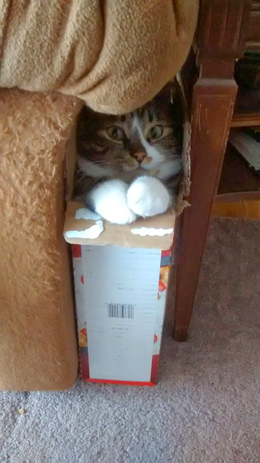 Funny cats - part 88 (40 pics + 10 gifs), cat inside a box