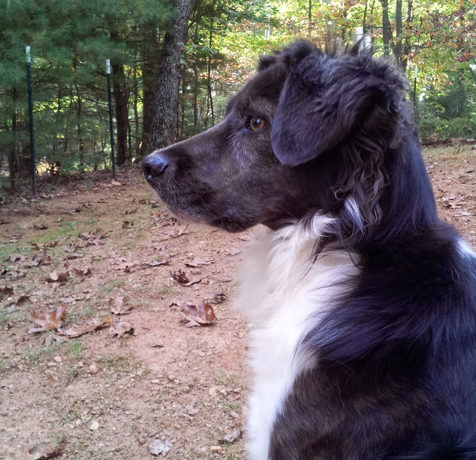Doxycycline Treat Dog Anemia
