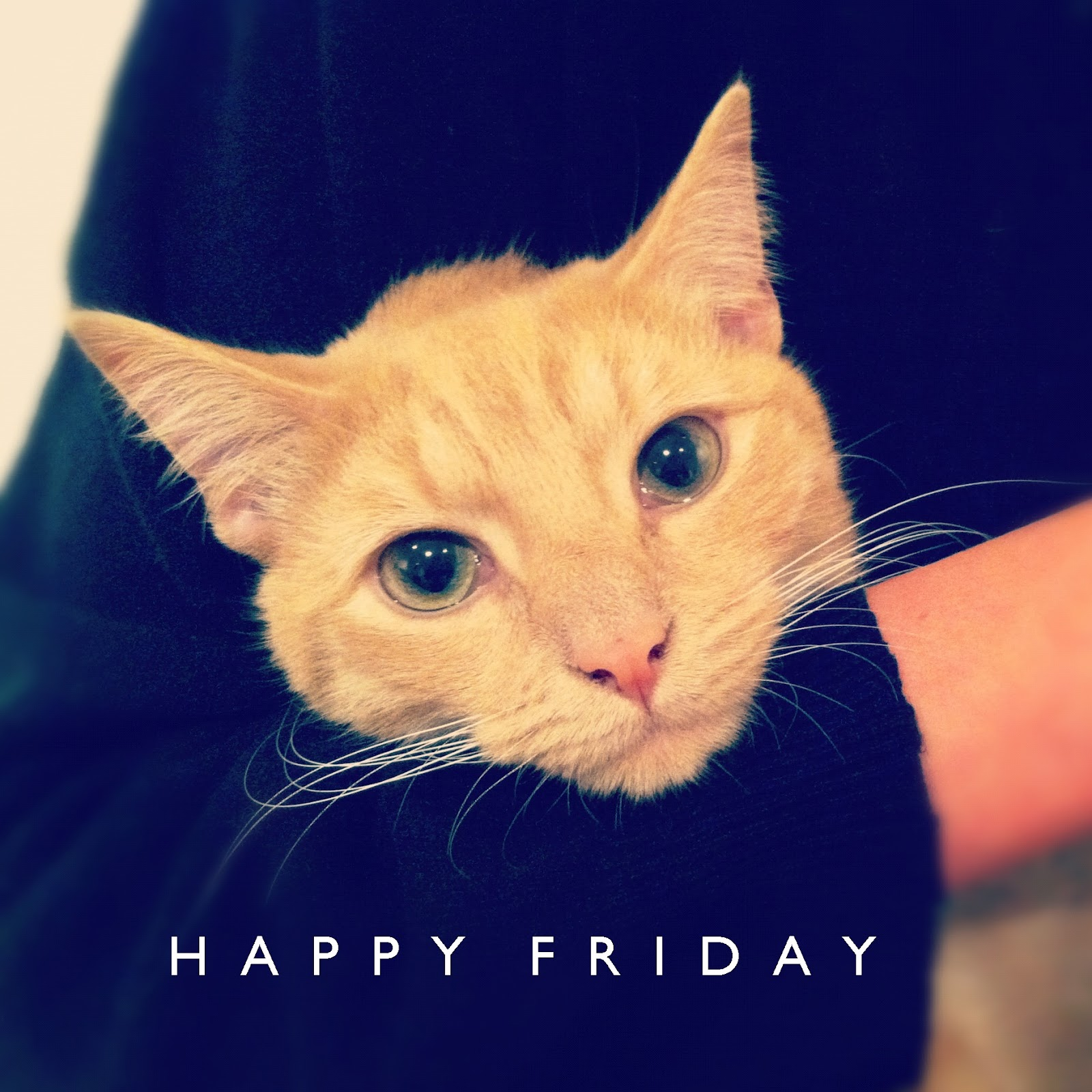Happy Friday Cat Images - Reverse Search