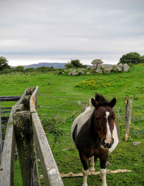 Horse near Carrowmore Megalithic Burial Site in County Sligo, Ireland