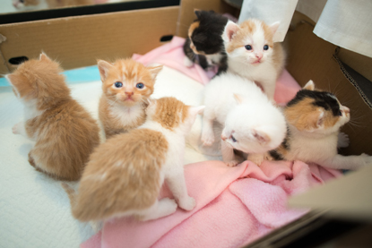 a litter of ginger, white and tortoiseshell kittens