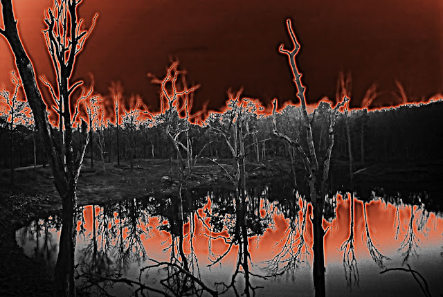 graphic of a forest fire